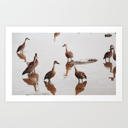 Flush of Ducks Art Print