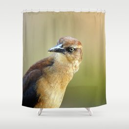 Female Great-tailed Grackle Shower Curtain