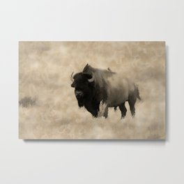 American Buffalo  -  Plains Bison Metal Print