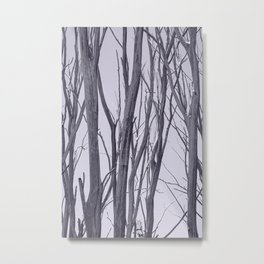 Ghosts of the bushland Metal Print