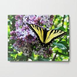 Timid Tiger Swallowtail Butterfly Metal Print