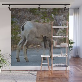 Big horn sheep stops to pose in Jasper National Park Wall Mural
