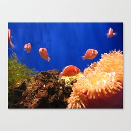 The world under the water Canvas Print