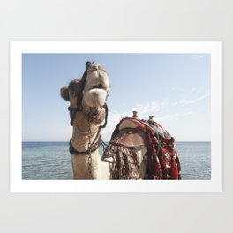 Red Sea Camel Art Print