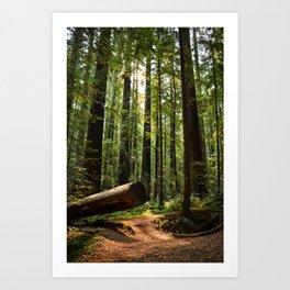 Humboltd Redwoods State Park Art Print