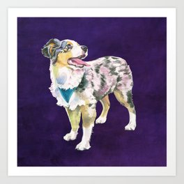 Toy Australian Shepherd Art Print
