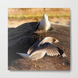 Seagull dance Metal Print