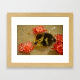 Ducky in the Flowers Framed Art Print