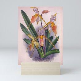 Vintage Peachy Orange Orchids Cyprepedium Praestans Mini Art Print