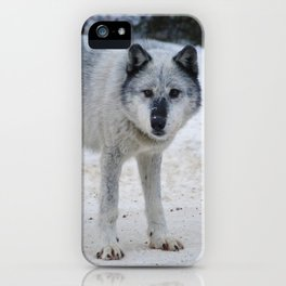 Lone wolf of the Canadian Rocky Mountains iPhone Case