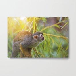 Squirrel Monkey wild animal in sunlight Metal Print