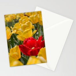 Many yellow tulips and one red Stationery Cards