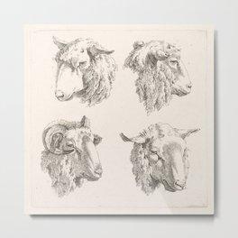 Sheep Illustration, 18th Century Metal Print