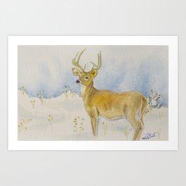 Winter Whitetail Art Print