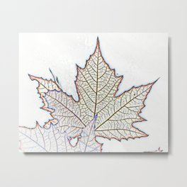 spectacular autumn colors of the leaves Metal Print