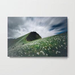 Thousands of narcissus on Golica, Slovenia Metal Print