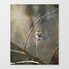 Morning Goldfinch Canvas Print