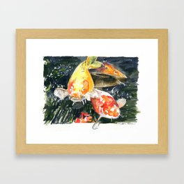 Koi carp 3 Framed Art Print