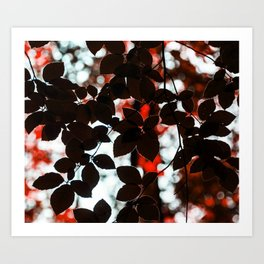 Fagus purpurea Art Print