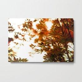 Wind in the Maple Metal Print