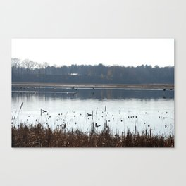 Ducks flying low over water in Massachusetts.  Canvas Print