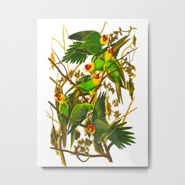 Carolina Parrot Metal Print