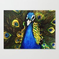 modest mouse Canvas Prints featuring Modest Peacock by Erin Glynn