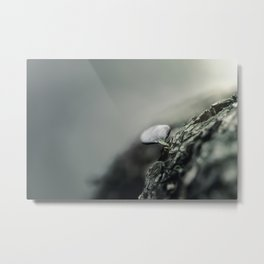 Don't look at the leaf Metal Print