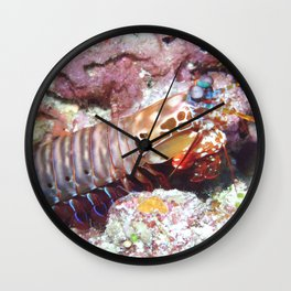 Mantis shrimp (the weirdest animal on the planet) Wall Clock