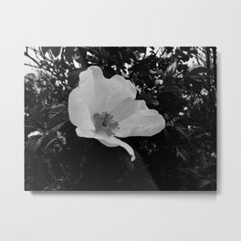 Wild Beach Rose in Black and White Metal Print