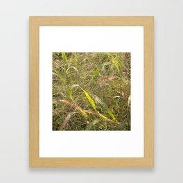 Autumn Grasses Framed Art Print