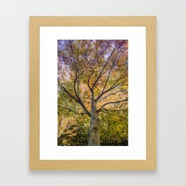 Beautiful Trees / 12 Framed Art Print