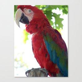 Pretty Pretty Bird Canvas Print