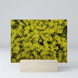 Goldmoss Stars. Mini Art Print