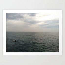 Newport Beach Dolphin Art Print