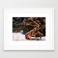 lobster Framed Art Prints featuring Lobster by Moonlake Designs