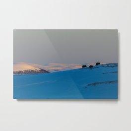 Musk Ox sunset Metal Print