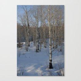 Colorado Tress Canvas Print