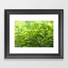 Fresh summer herbs in the garden Framed Art Print