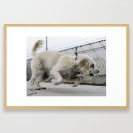 Fernie dog Framed Art Print