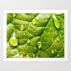 green and fresh Art Print