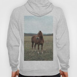 Horse in the field. Fine art film photography Hoody