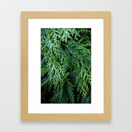 Pacific Redcedar Framed Art Print