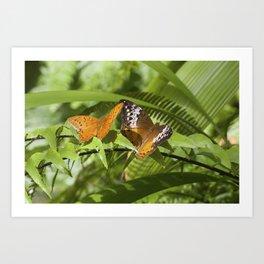Cruiser Butterfly - pair Art Print