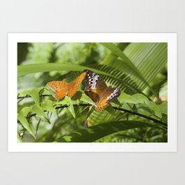 Cruiser Butterfly - pair Art Print
