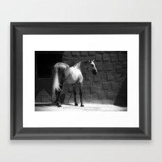 Mestizo Framed Art Print