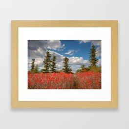 Autumn Huckleberry Wonderland Framed Art Print