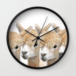 Alpaca Line Up Wall Clock