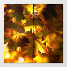 Sun kissed Sycamore leaves Canvas Print