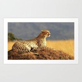 Cheetah on the hill Art Print